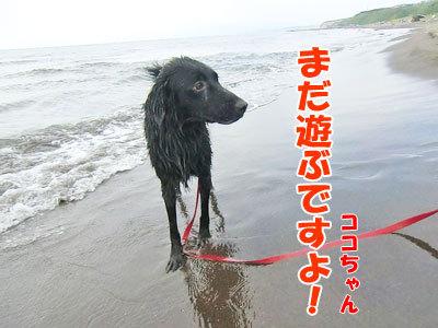 チャンスとティアラ+ココ-20120723-13-400.jpg