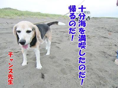 チャンスとティアラ+ココ-20120723-14-400.jpg