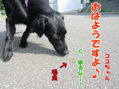 チャンスとティアラ+ココ-20120724-2-400.jpg