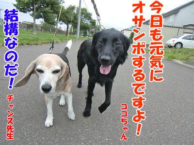 チャンスとティアラ+ココ-20120724-3-400.jpg
