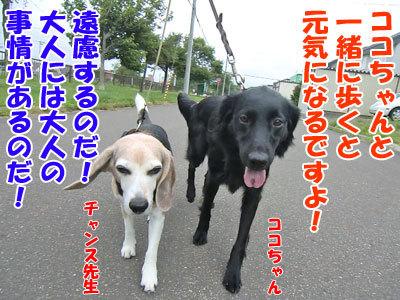 チャンスとティアラ+ココ-20120724-4-400.jpg