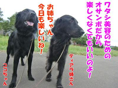 チャンスとティアラ+ココ-20120724-5-400.jpg