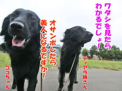 チャンスとティアラ+ココ-20120724-6-400.jpg