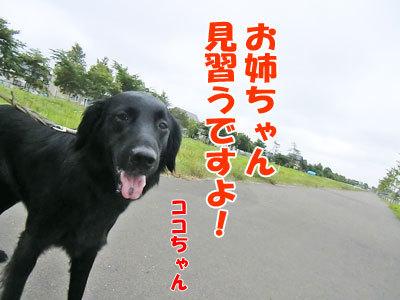 チャンスとティアラ+ココ-20120724-7-400.jpg