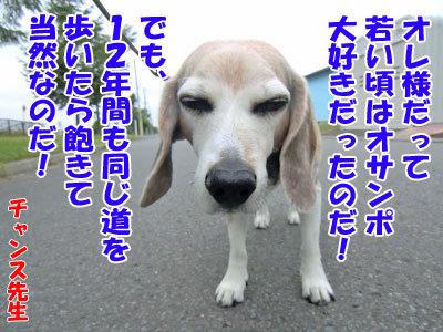 チャンスとティアラ+ココ-20120724-9-400.jpg