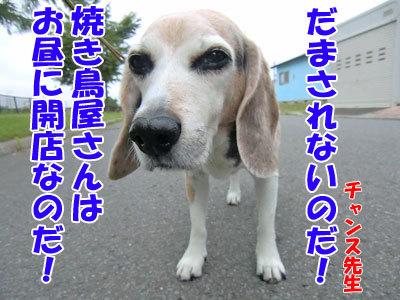 チャンスとティアラ+ココ-20120724-10-400.jpg