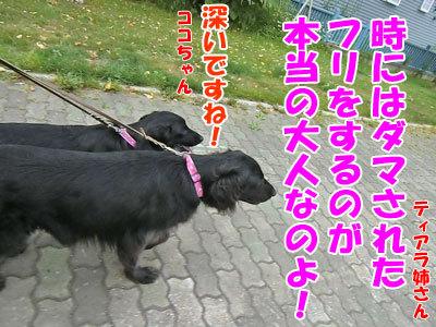 チャンスとティアラ+ココ-20120724-11-400.jpg
