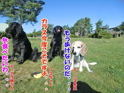 チャンスとティアラ+ココ-20120725-3-400.jpg