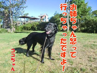 チャンスとティアラ+ココ-20120725-4-400.jpg