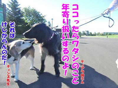 チャンスとティアラ+ココ-20120725-6-400.jpg