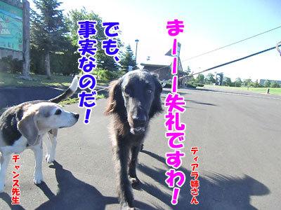 チャンスとティアラ+ココ-20120725-7-400.jpg