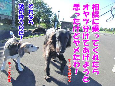 チャンスとティアラ+ココ-20120725-8-400.jpg