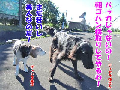 チャンスとティアラ+ココ-20120725-9-400.jpg