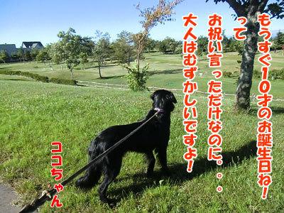 チャンスとティアラ+ココ-20120725-10-400.jpg