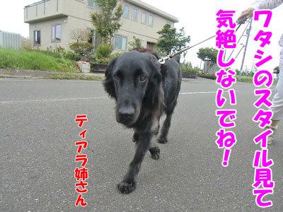 チャンスとティアラ+ココ-20120726-1-400.jpg