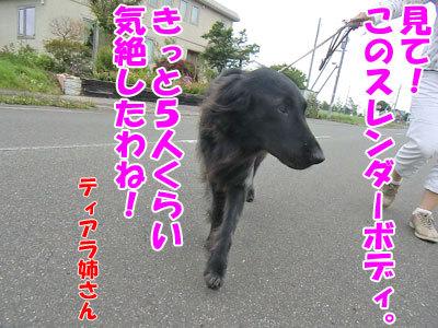 チャンスとティアラ+ココ-20120726-2-400.jpg