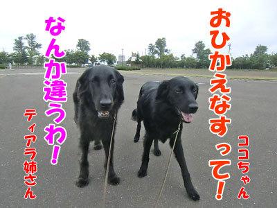 チャンスとティアラ+ココ-20120726-3-400.jpg