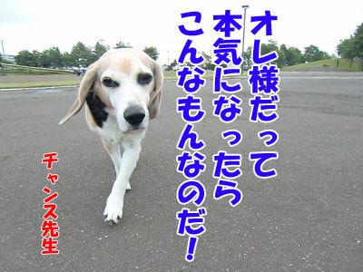 チャンスとティアラ+ココ-20120726-4-400.jpg