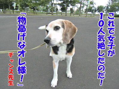 チャンスとティアラ+ココ-20120726-5-400.jpg