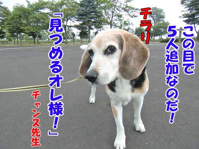 チャンスとティアラ+ココ-20120726-6-400.jpg