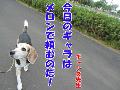 チャンスとティアラ+ココ-20120726-7-400.jpg