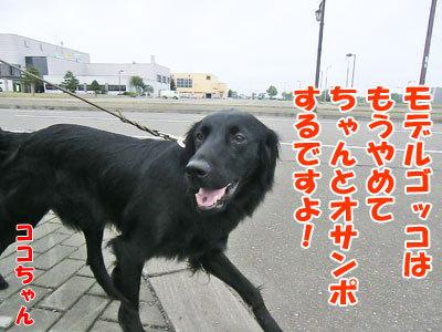 チャンスとティアラ+ココ-20120726-8-400.jpg