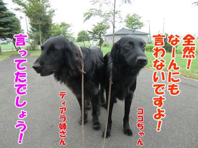 チャンスとティアラ+ココ-20120727-2-400.jpg