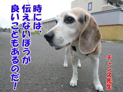 チャンスとティアラ+ココ-20120727-5-400.jpg