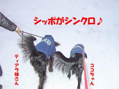 チャンスとティアラ+ココ-20110114-1-400.jpg