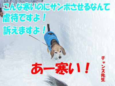 チャンスとティアラ+ココ-20110114-2-400.jpg