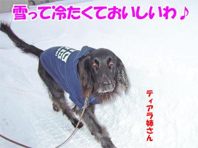 チャンスとティアラ+ココ-20110114-3-400.jpg