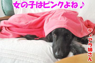 チャンスとティアラ+ココ-20110114-5-400.jpg