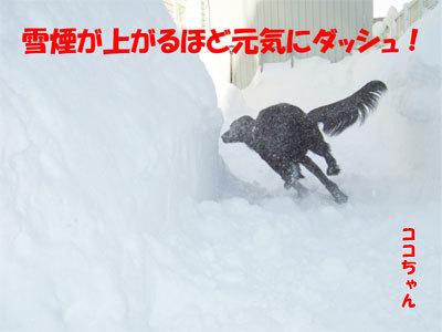 チャンスとティアラ+ココ-20110114-6-400.jpg