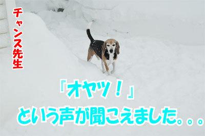 チャンスとティアラ+ココ-20110114-7-400.jpg