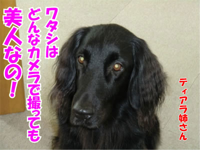 チャンスとティアラ+ココ-20110120-2-400.jpg