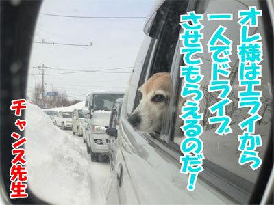 チャンスとティアラ+ココ-20110120-4-400.jpg