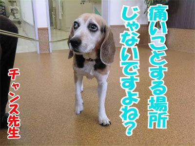 チャンスとティアラ+ココ-20110120-5-400.jpg
