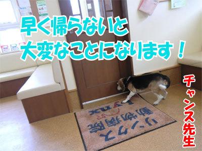 チャンスとティアラ+ココ-20110120-8-400.jpg