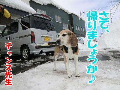 チャンスとティアラ+ココ-20110120-10-400.jpg