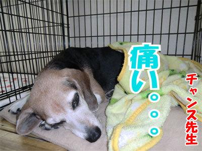 チャンスとティアラ+ココ-20110120-11-400.jpg