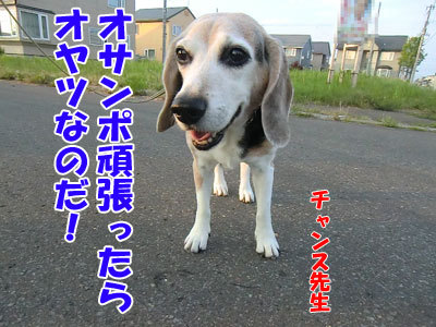 チャンスとティアラ+ココ-20120730-1-400.jpg
