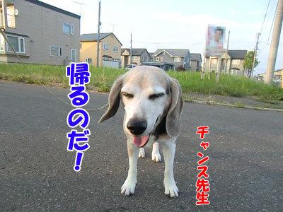 チャンスとティアラ+ココ-20120730-2-400.jpg