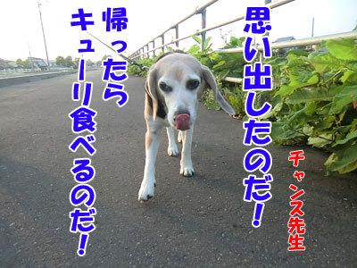 チャンスとティアラ+ココ-20120730-4-400.jpg