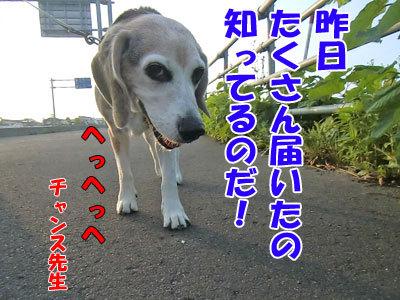 チャンスとティアラ+ココ-20120730-5-400.jpg