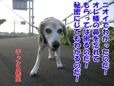 チャンスとティアラ+ココ-20120730-6-400.jpg