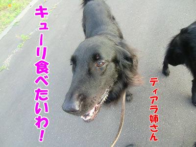 チャンスとティアラ+ココ-20120730-7-400.jpg