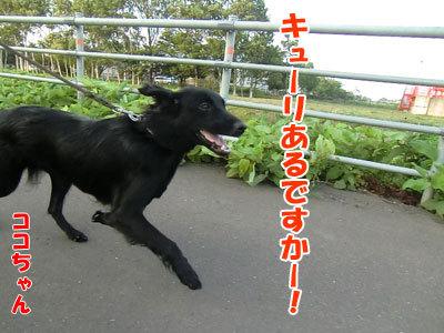 チャンスとティアラ+ココ-20120730-8-400.jpg
