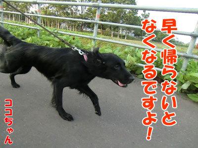 チャンスとティアラ+ココ-20120730-9-400.jpg