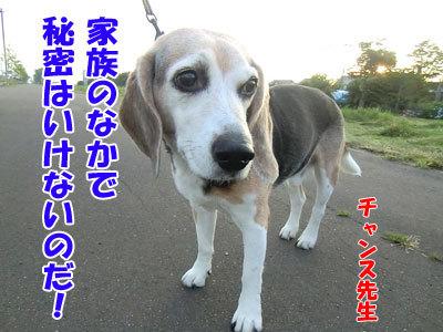 チャンスとティアラ+ココ-20120730-10-400.jpg