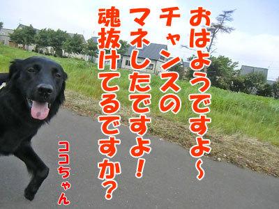 チャンスとティアラ+ココ-20120731-1-400.jpg